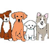 Canine Adoption and Rescue League